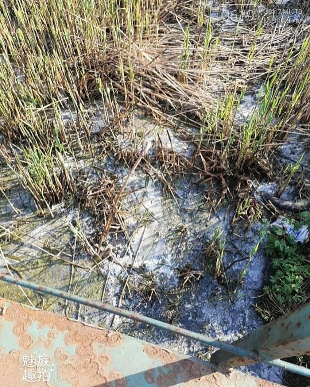 Мелитопольцы жалуются на зловонную реку , фото-3, Фото из соцсети