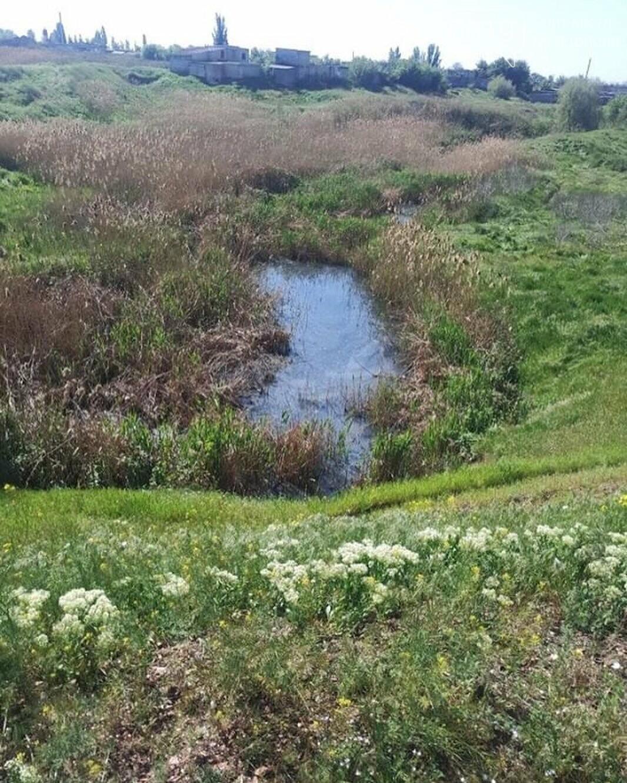 Мелитопольцы жалуются на зловонную реку , фото-2, Фото из соцсети