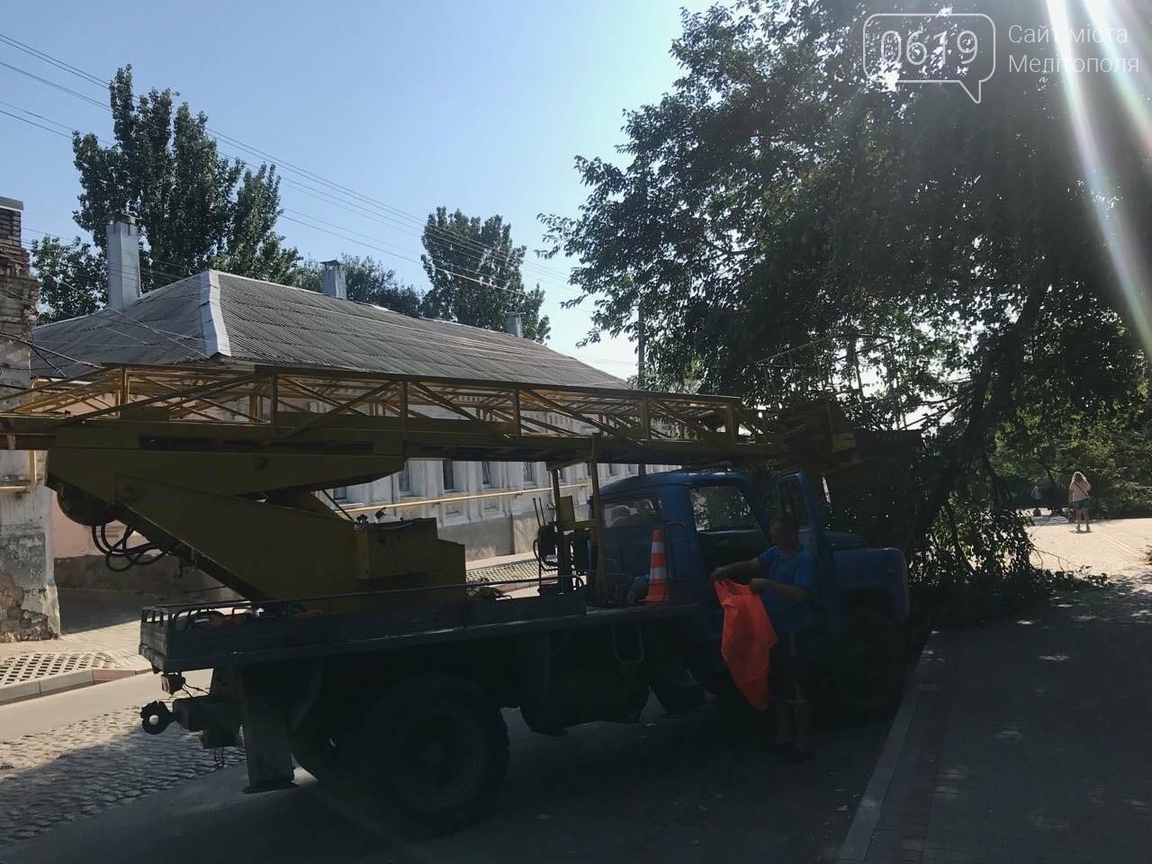 В центре Мелитополя на тротуар рухнула огромная ветка, фото-2