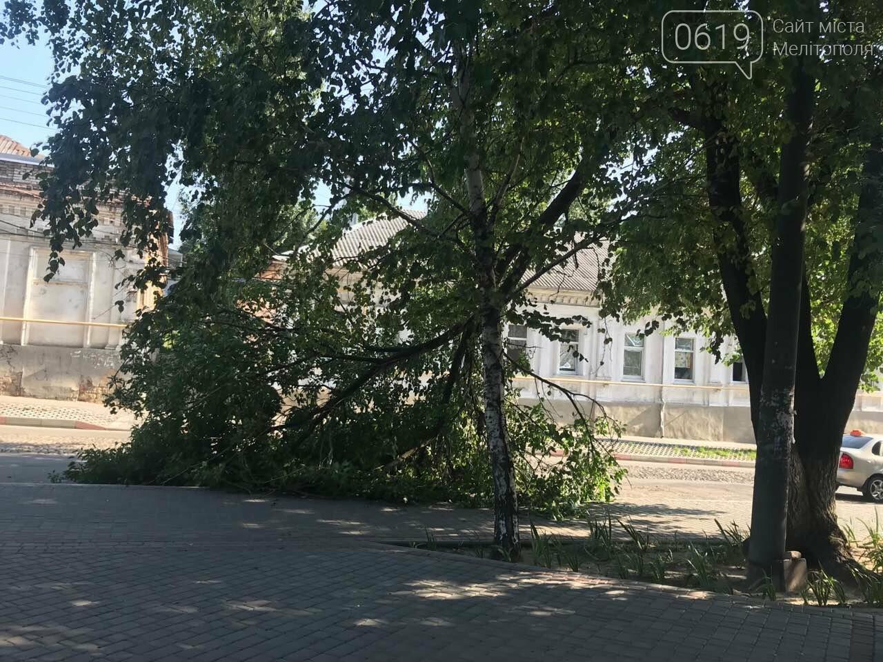 В центре Мелитополя на тротуар рухнула огромная ветка, фото-1