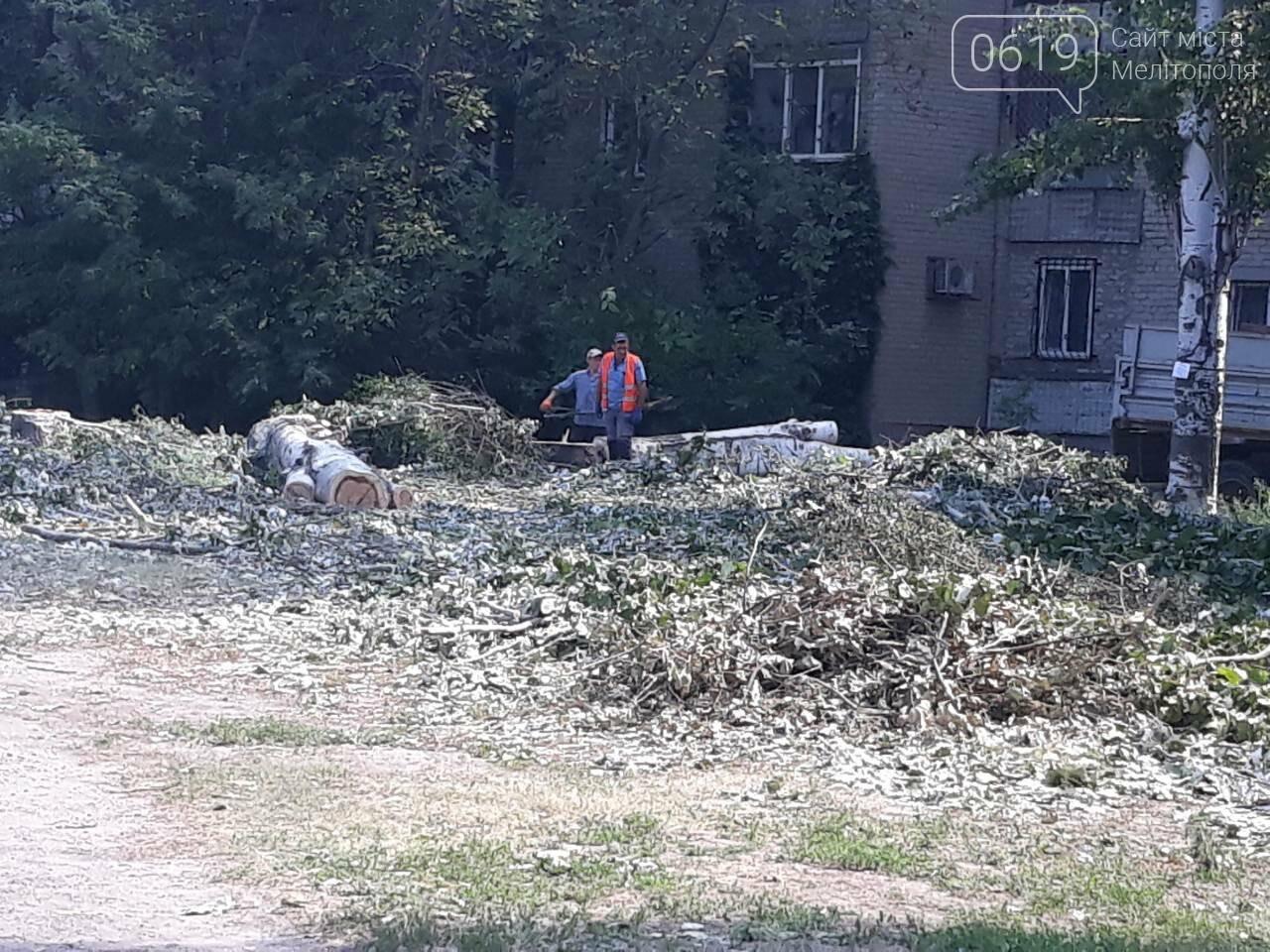 В Мелитополе массово пилят тополя, фото-2
