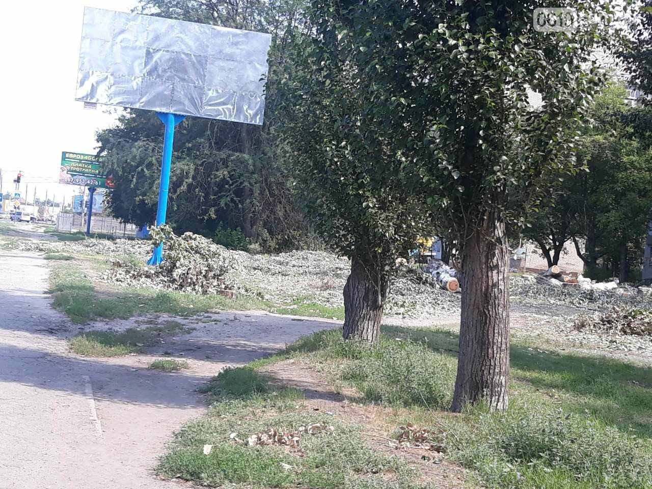 В Мелитополе массово пилят тополя, фото-1