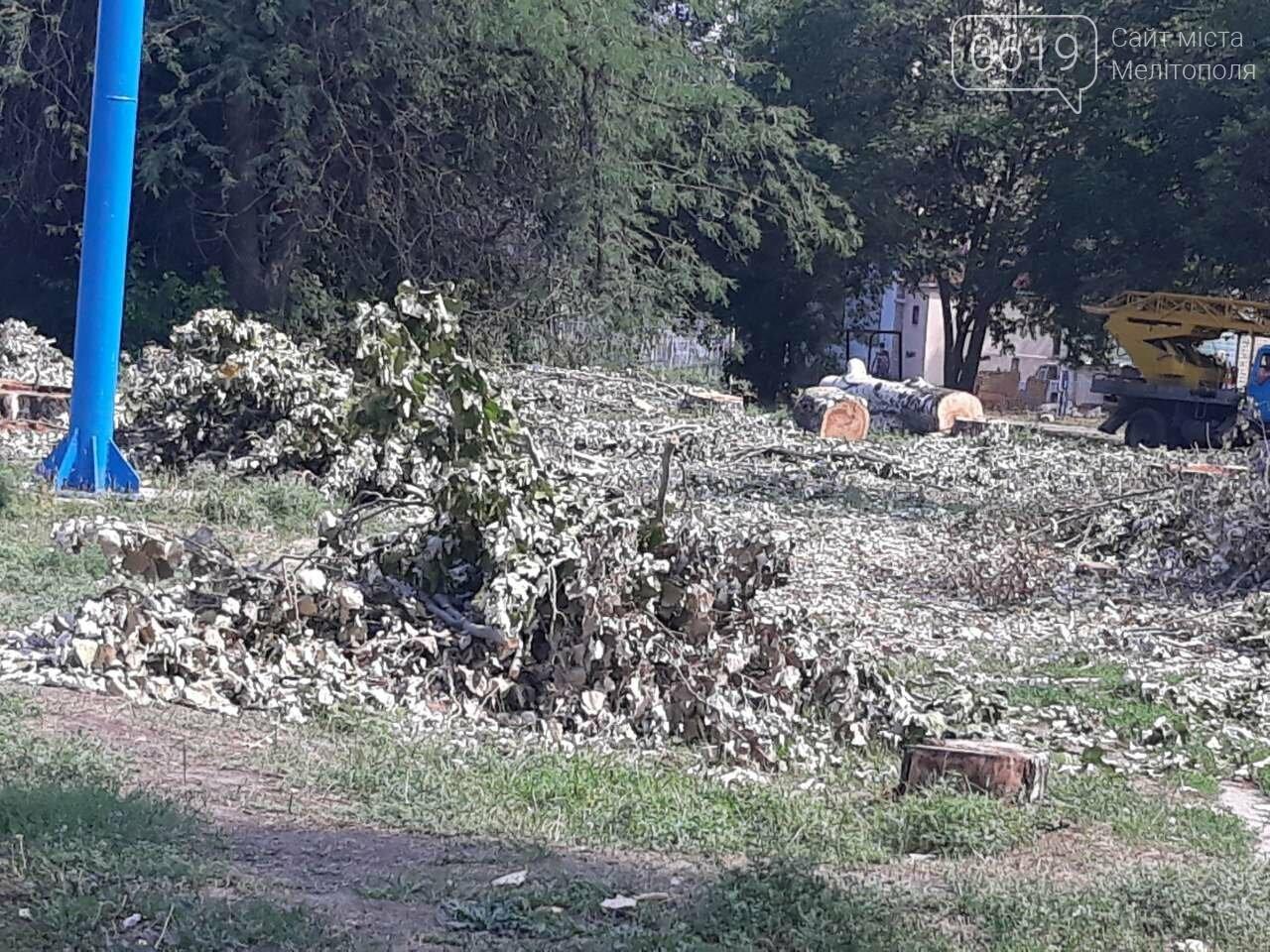 В Мелитополе массово пилят тополя, фото-3