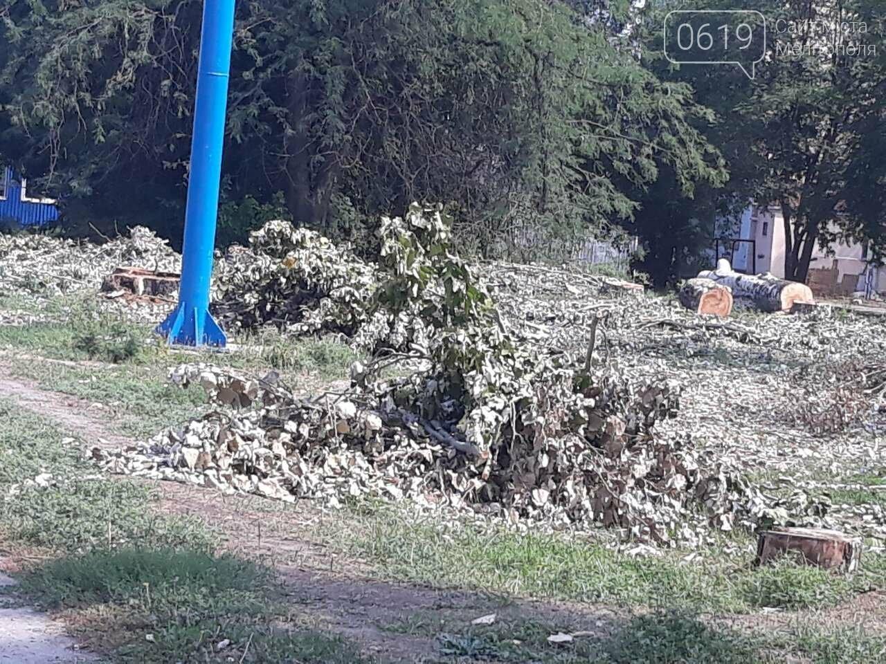 В Мелитополе массово пилят тополя, фото-5