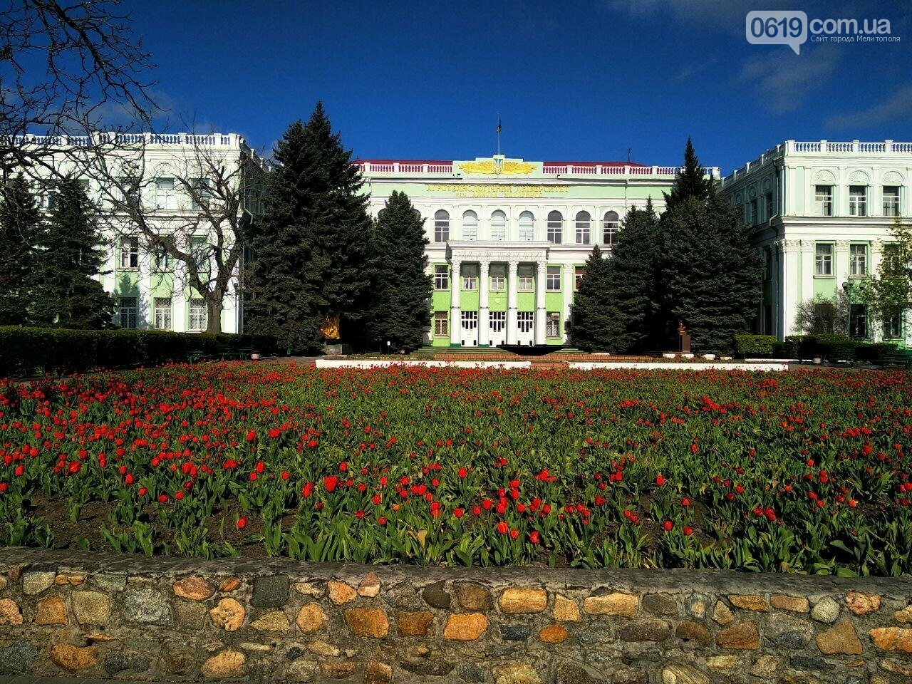 У центрі Мелітополя квітнуть сотні тюльпанів, фото-2