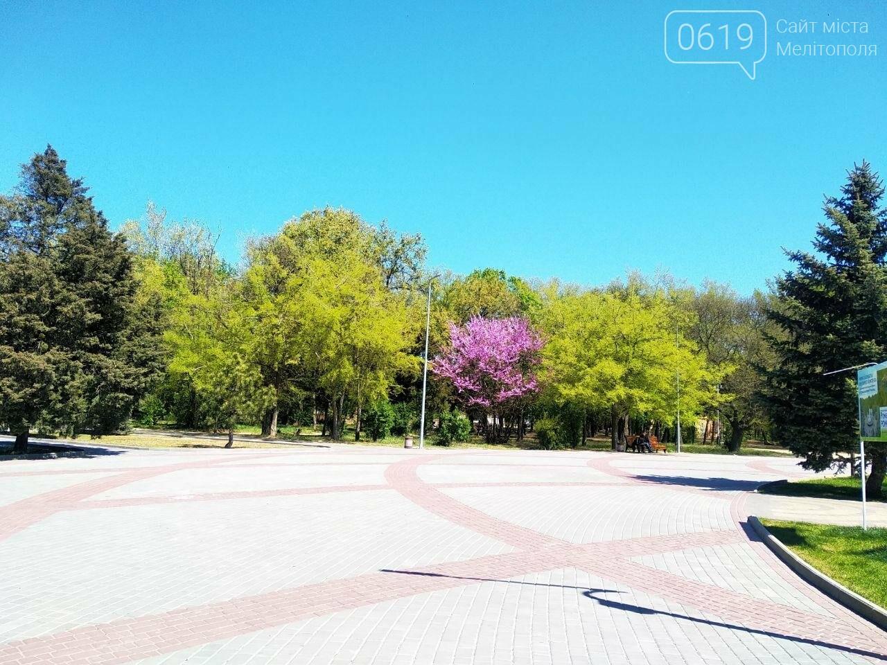 В мелитопольском парке цветет робиния, фото-4