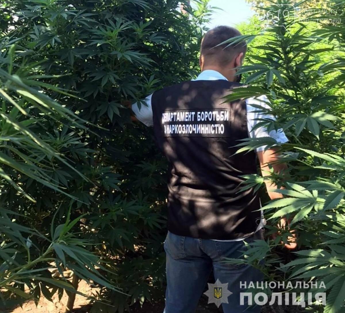 В Мелитопольском районе выявили плантацию конопли, фото-1