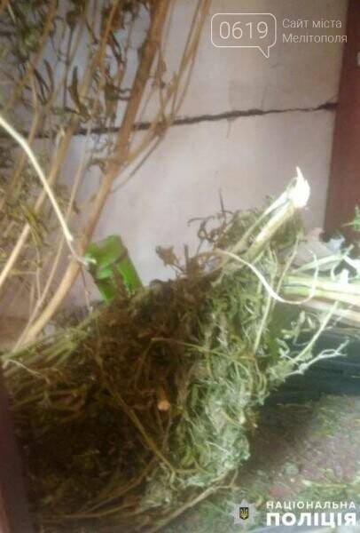 В Акимовском районе обнаружили плантацию конопли, фото-2