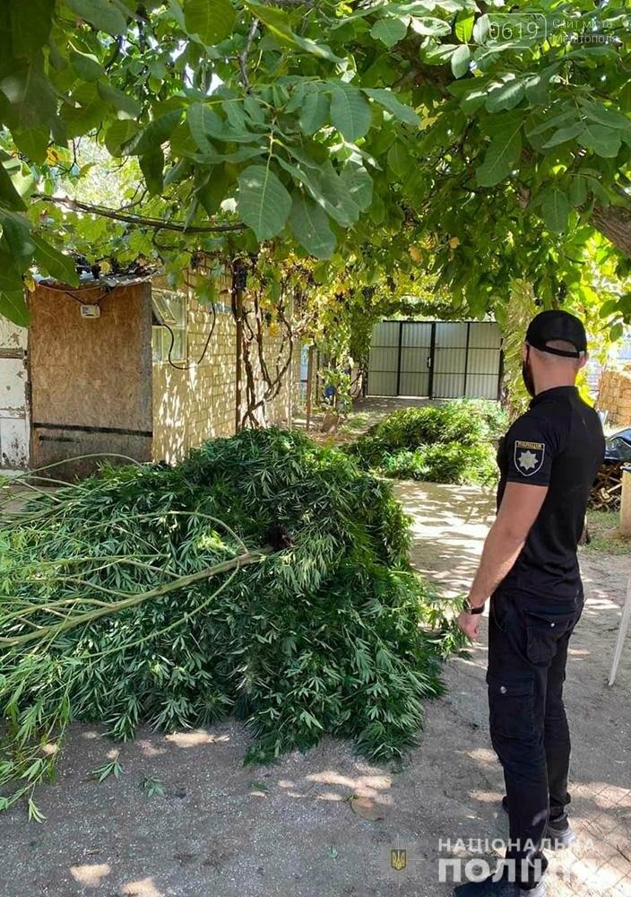 Под сеткой и охраной овчарок выращивал коноплю житель Мелитополя, фото-2