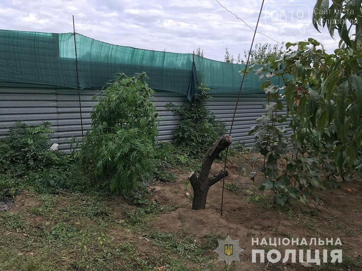 В Мелитополе правоохранители продолжают собирать урожай конопли на частных подворьях, фото-1