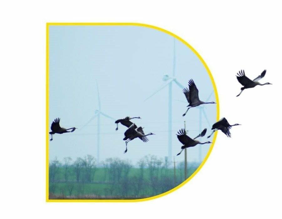 Міжнародний день птахів – особливе екологічне свято для зелених станцій ДТЕК ВДЕ у Запорізькій області, фото-1
