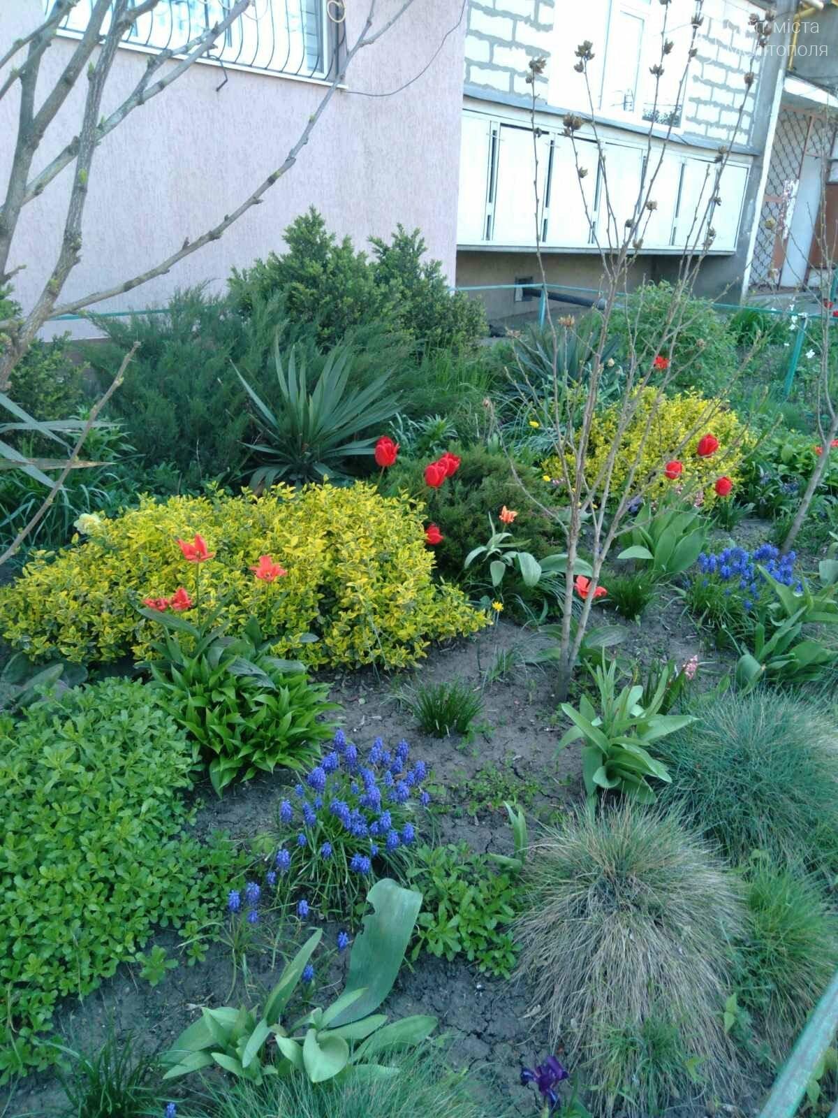 Цветущий и благоухающий Мелитополь: по городу идет весна, фото-2