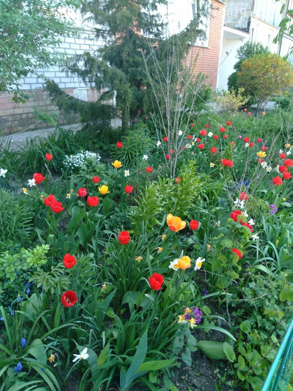 Цветущий и благоухающий Мелитополь: по городу идет весна, фото-1