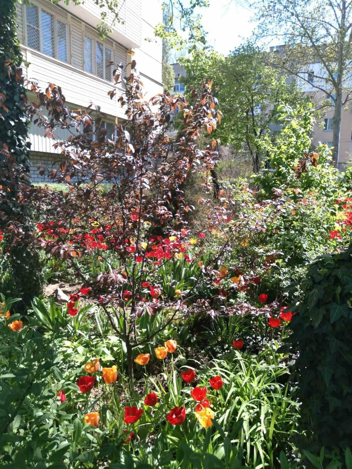 Цветущий и благоухающий Мелитополь: по городу идет весна, фото-3
