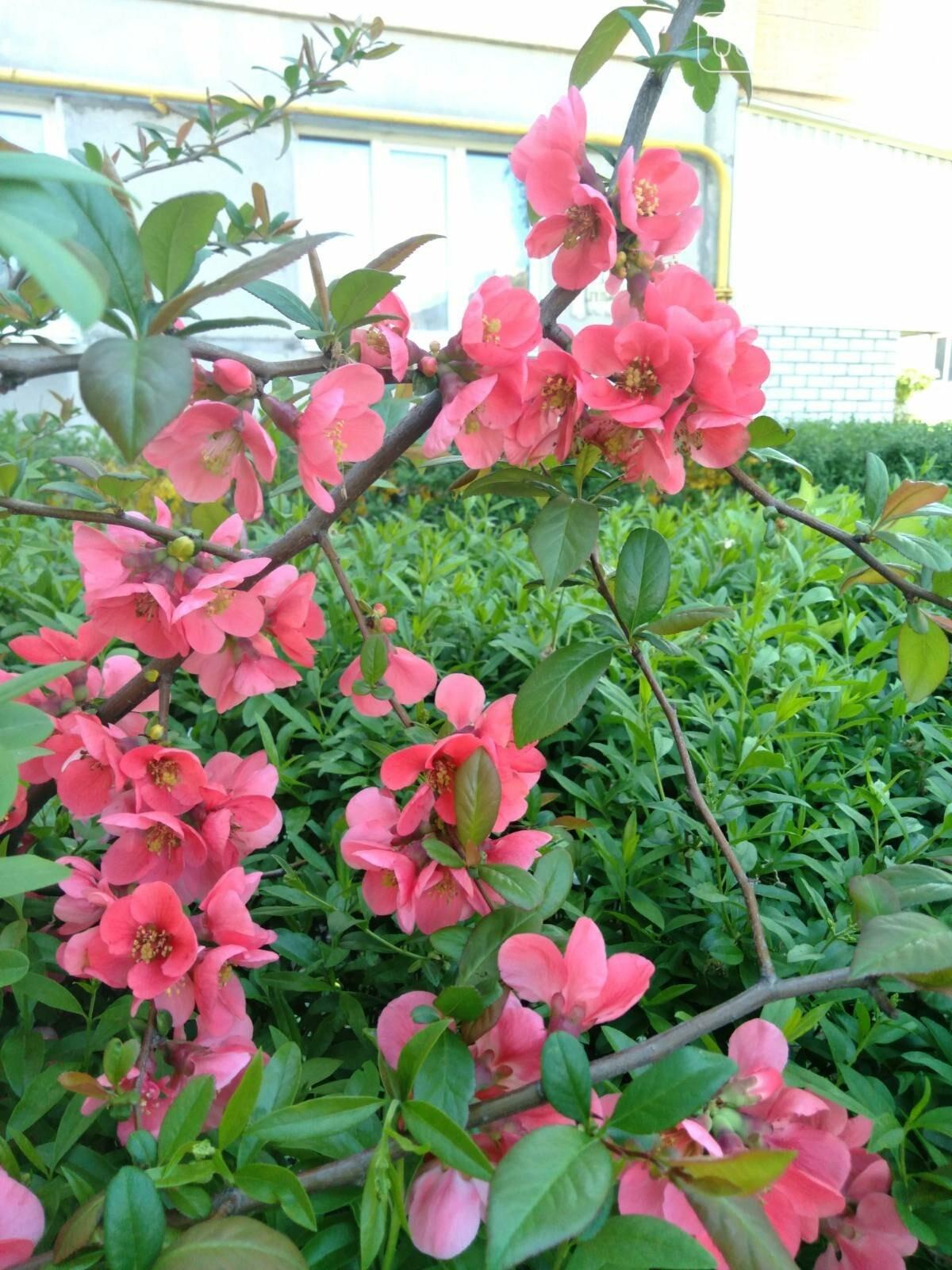 Цветущий и благоухающий Мелитополь: по городу идет весна, фото-9