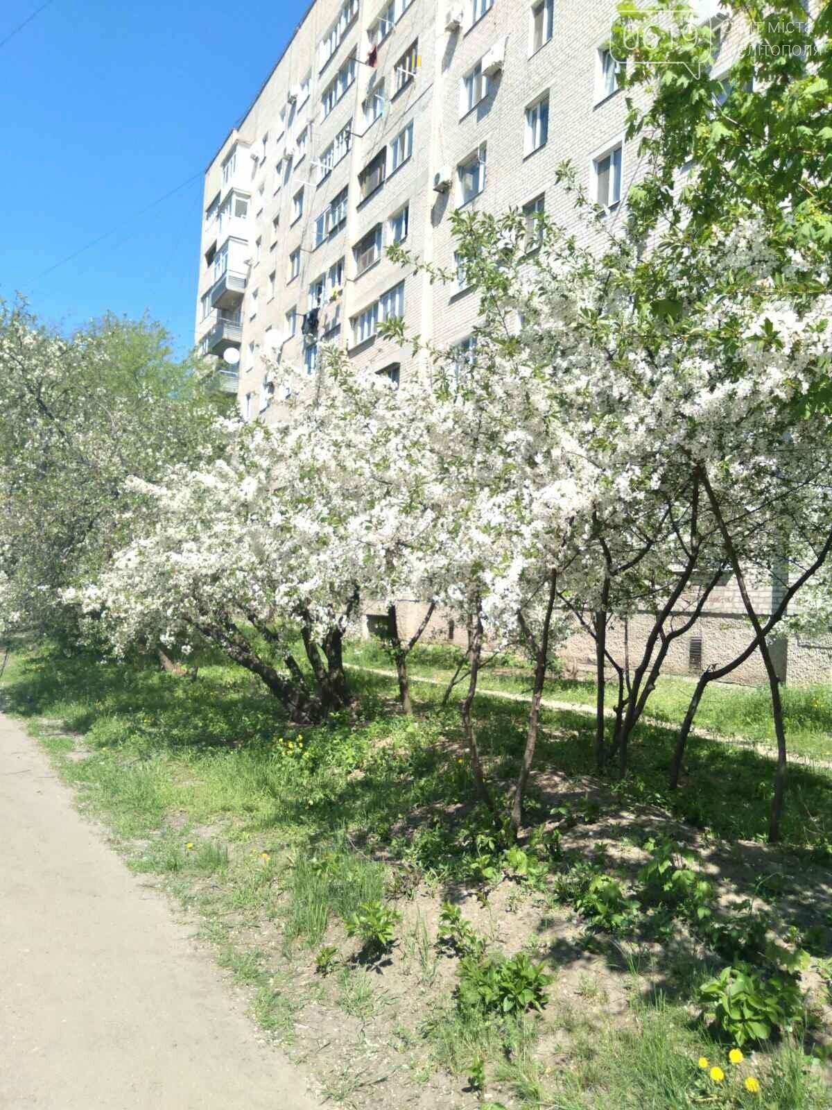 Цветущий и благоухающий Мелитополь: по городу идет весна, фото-8