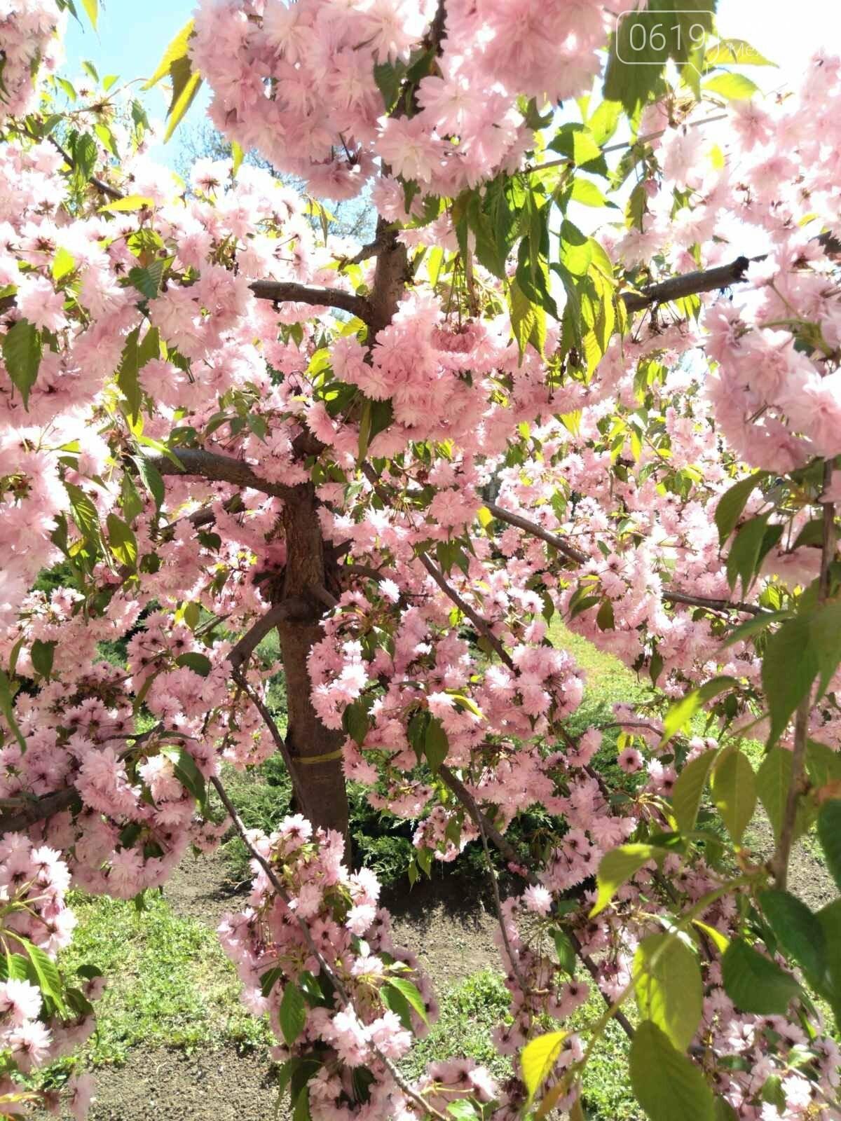 Цветущий и благоухающий Мелитополь: по городу идет весна, фото-10