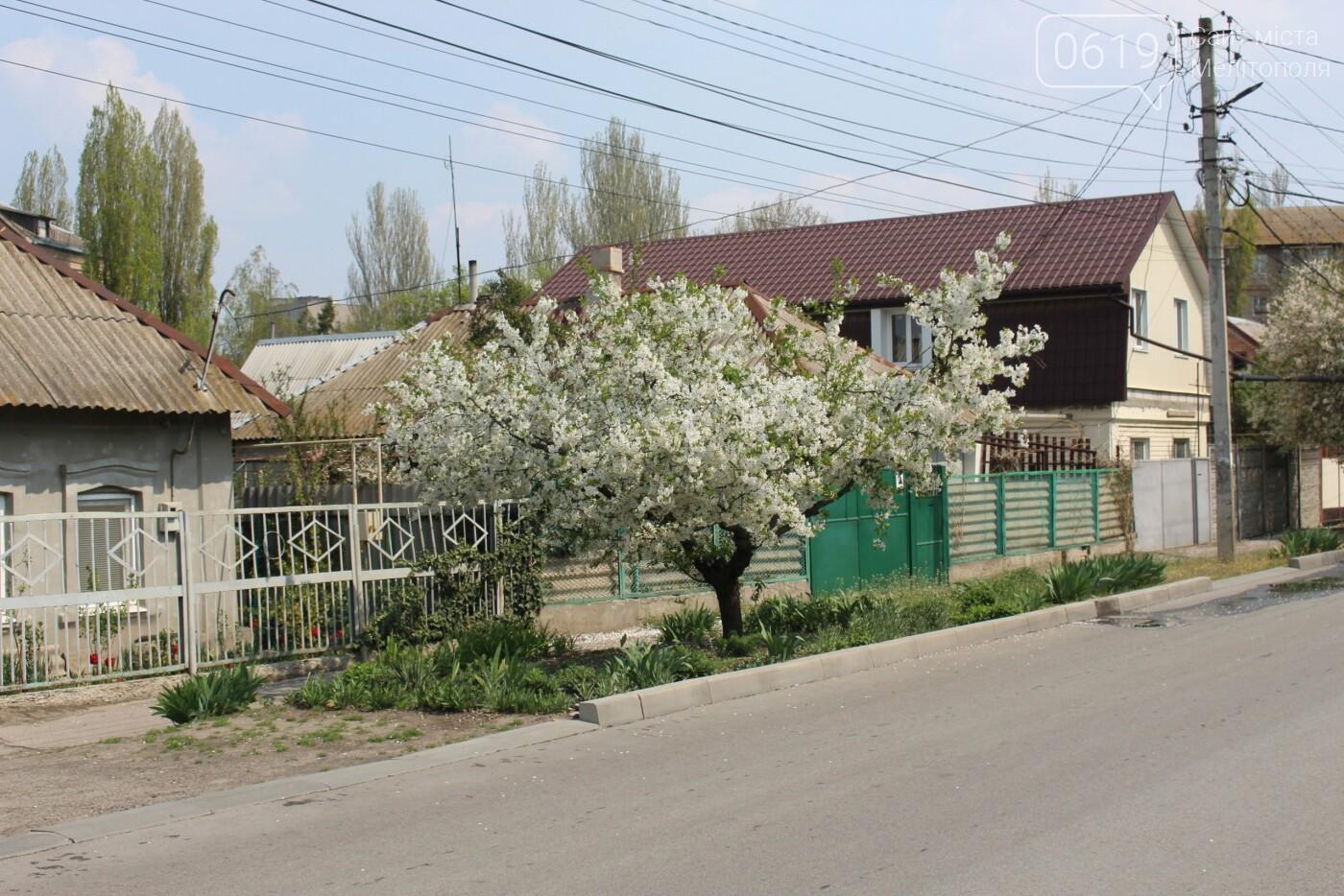 Цветущий и благоухающий Мелитополь: по городу идет весна, фото-7