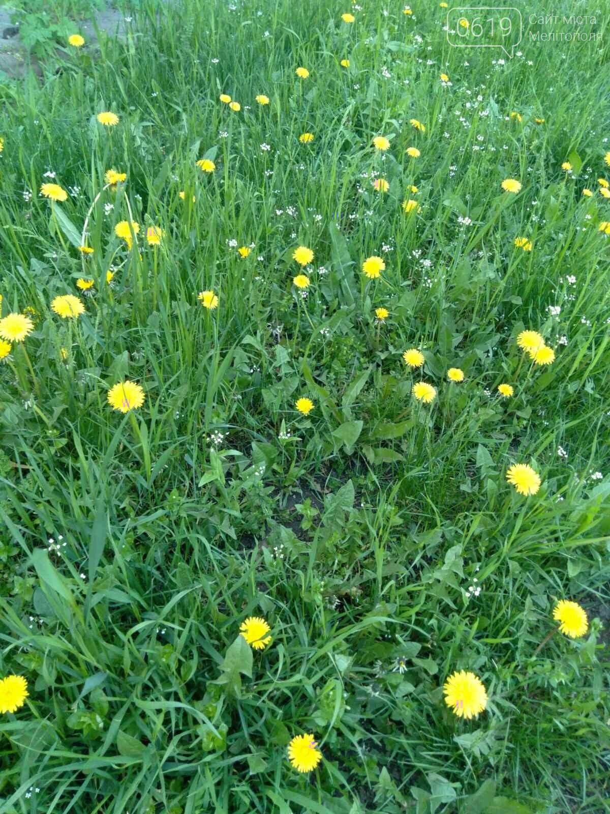 Цветущий и благоухающий Мелитополь: по городу идет весна, фото-4