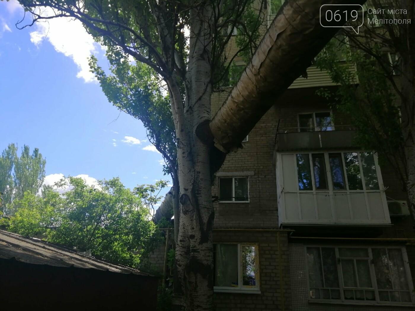 """Дерево """"вросло"""" в трубу теплосети: мелитопольцы обеспокоены последствиями, фото-4"""