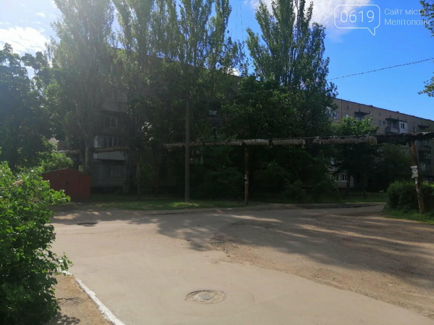 """Дерево """"вросло"""" в трубу теплосети: мелитопольцы обеспокоены последствиями, фото-5"""