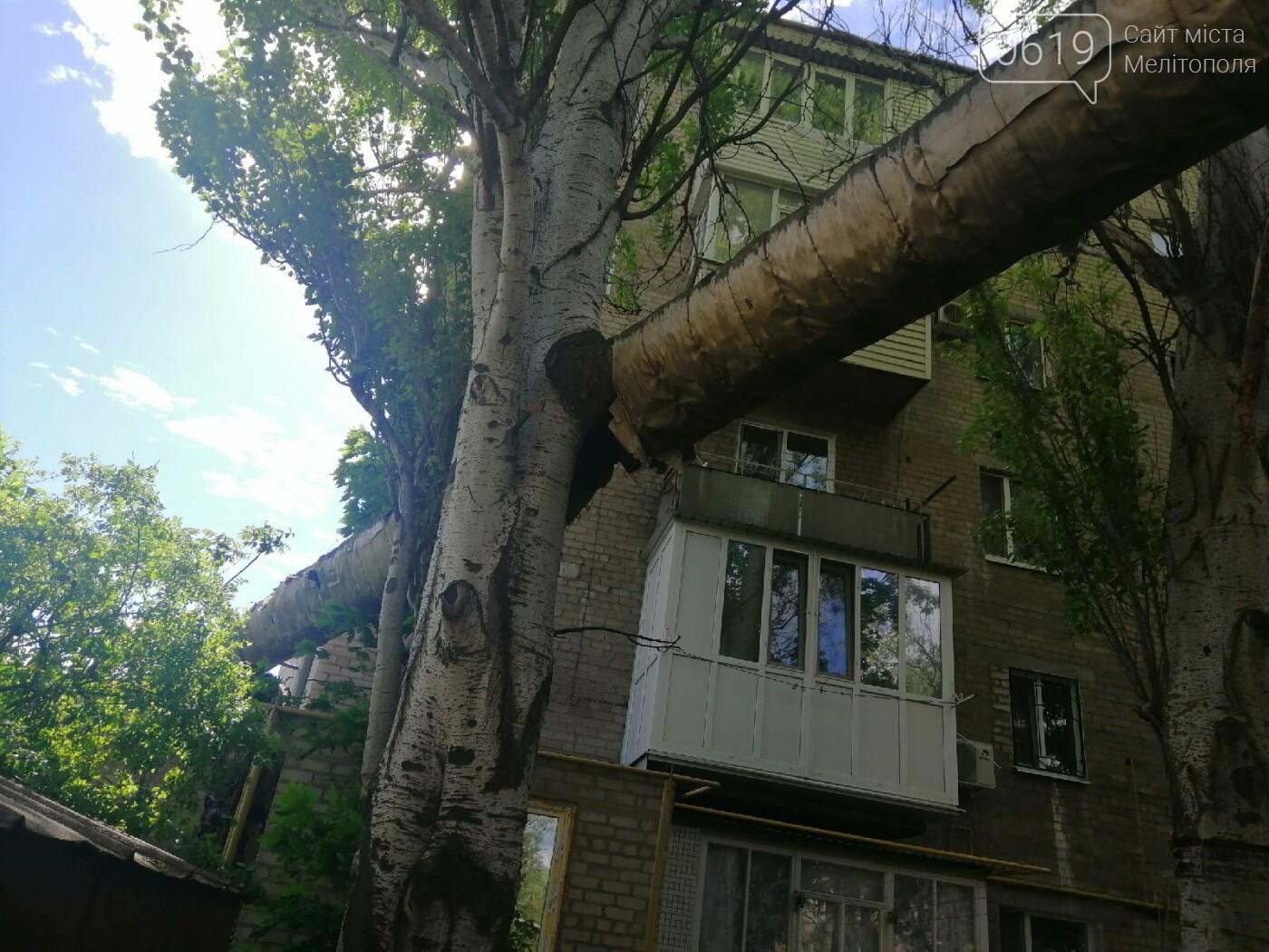 """Дерево """"вросло"""" в трубу теплосети: мелитопольцы обеспокоены последствиями, фото-2"""