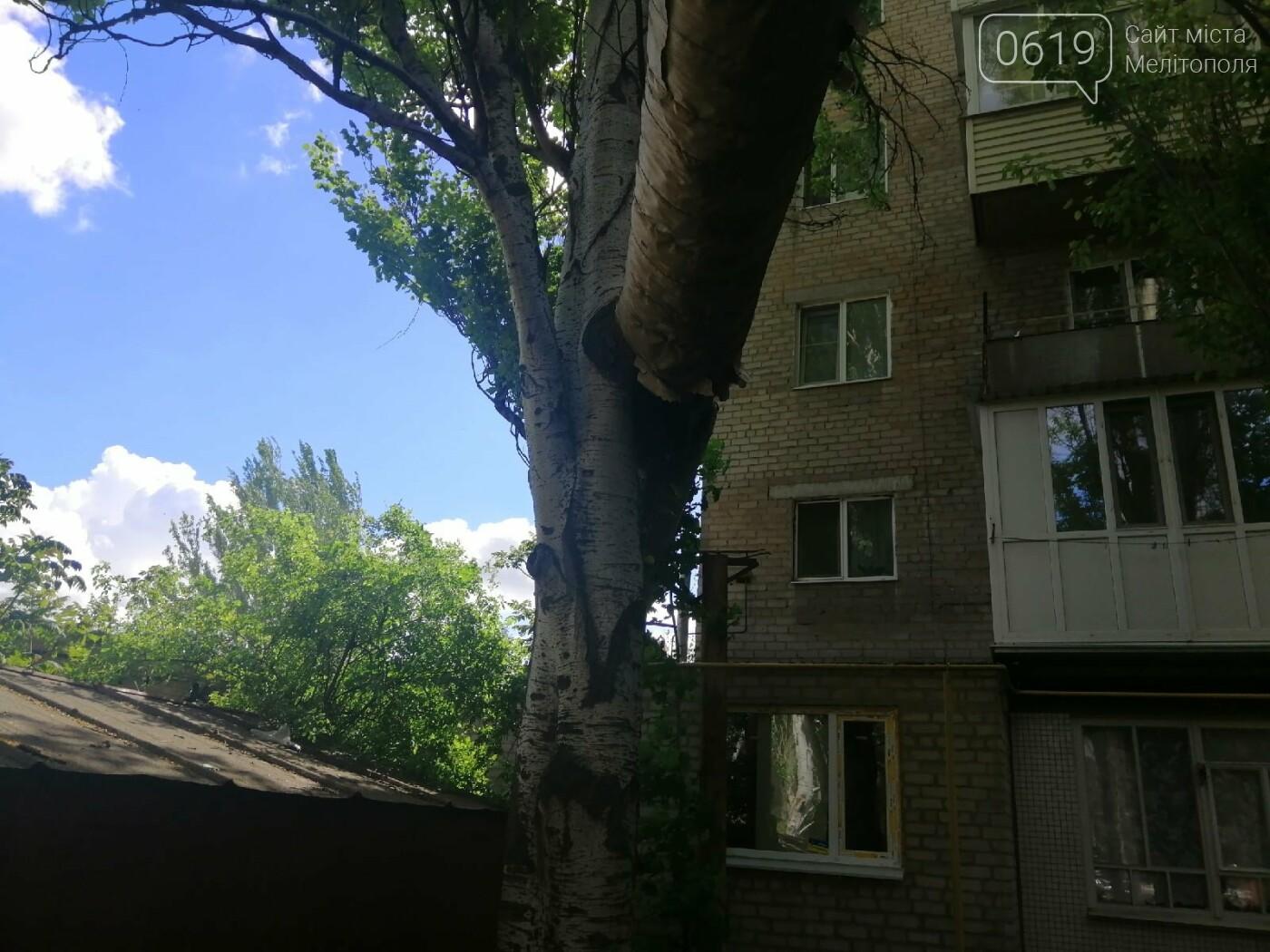 """Дерево """"вросло"""" в трубу теплосети: мелитопольцы обеспокоены последствиями, фото-3"""