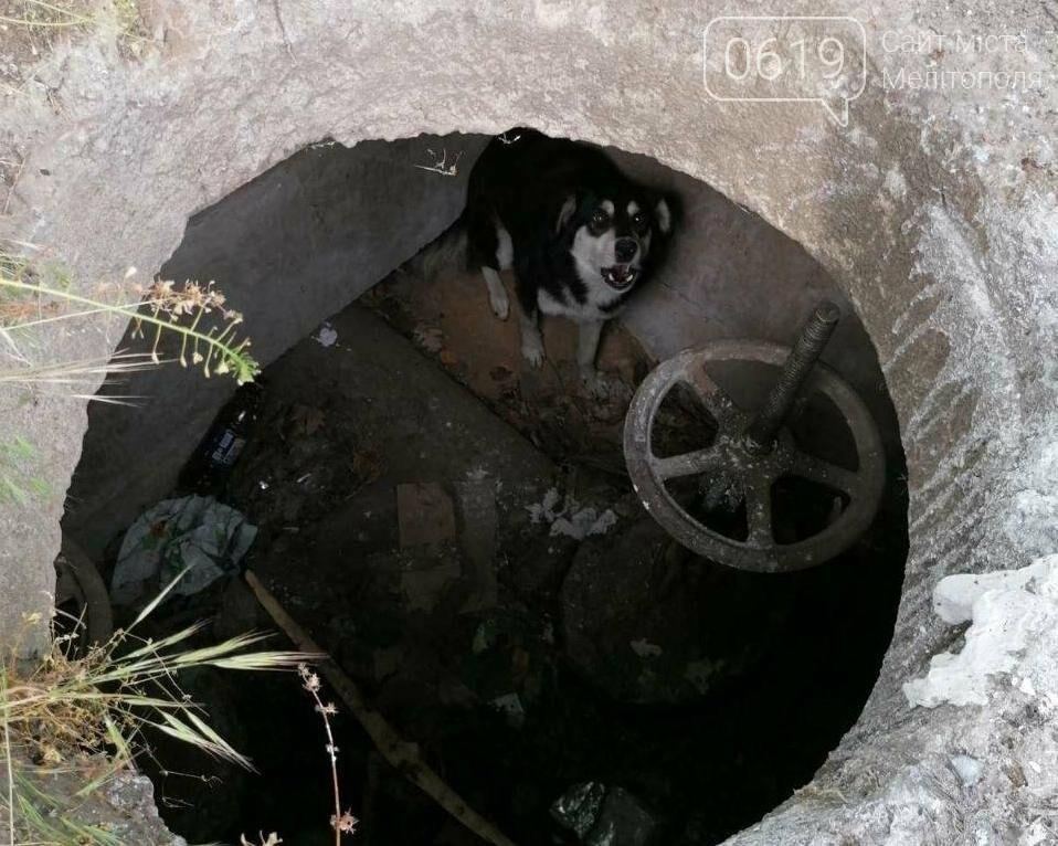 В Мелитополе сотрудники ГСЧС спасли собаку, фото-1