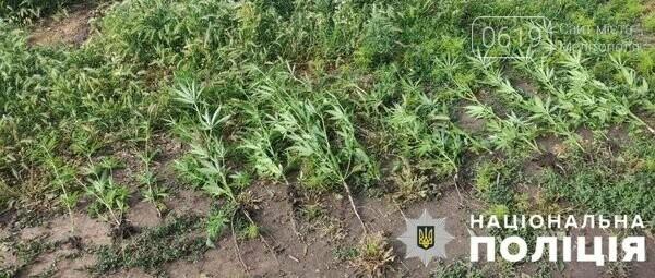 В Мелитопольском районе двое мужчин выращивали наркосодержащие растения, фото-4