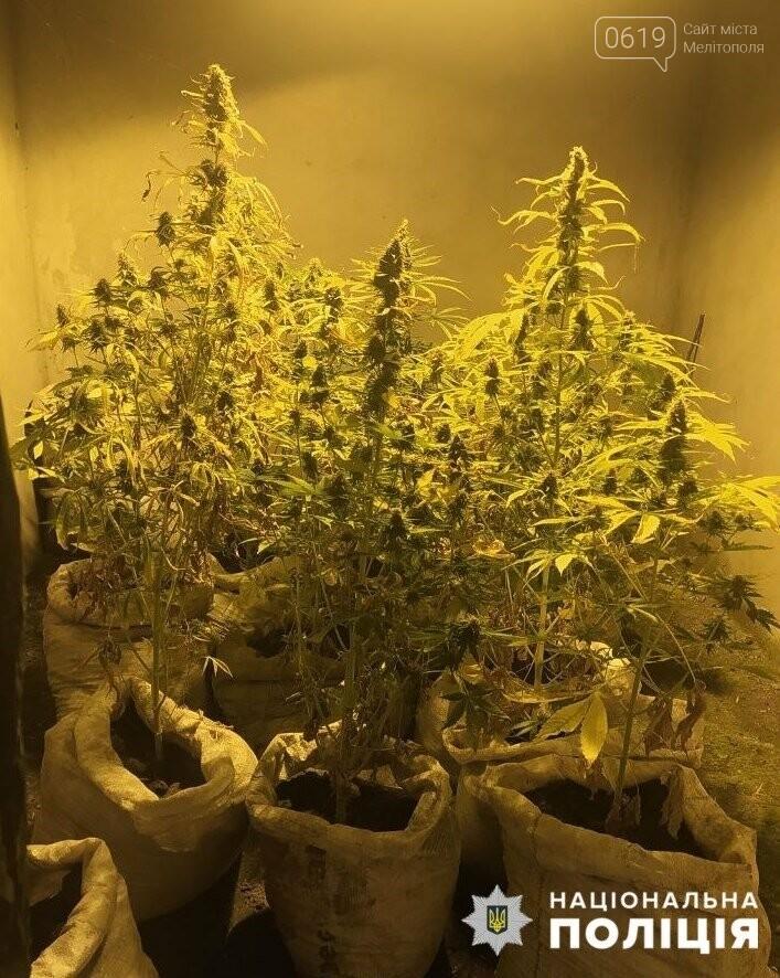 В Мелитопольском районе двое мужчин выращивали наркосодержащие растения, фото-1