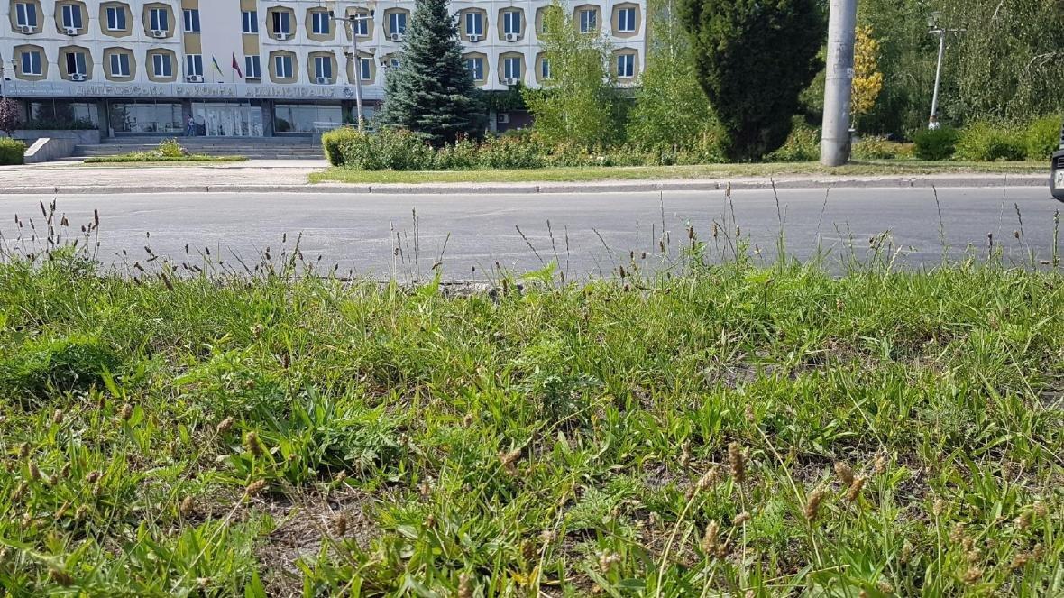 Жители Запорожья жалуются на амброзию, фото-1