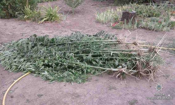 """""""Садовод-любитель"""" выращивал запрещенные растения , фото-2"""