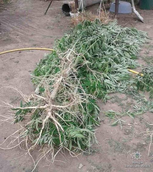 """""""Садовод-любитель"""" выращивал запрещенные растения , фото-1"""