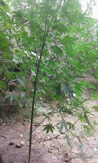 """""""Садовод-любитель"""" выращивал запрещенные растения , фото-3"""