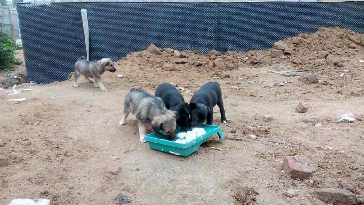 Двухмесячным щенкам ищут дом, фото-2, Фото из соцсети