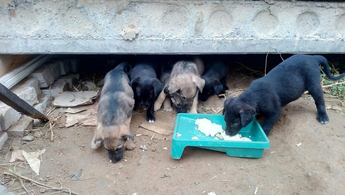 Двухмесячным щенкам ищут дом, фото-1, Фото из соцсети