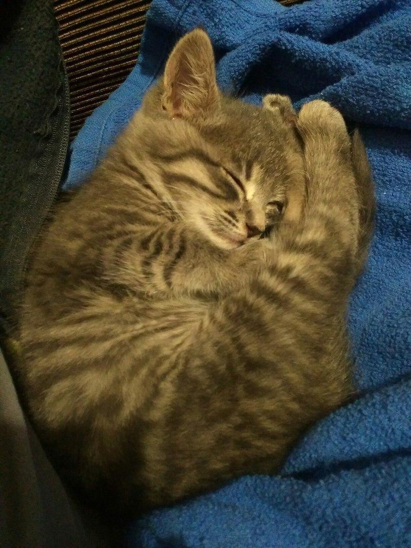 Кошке нужна ваша помощь , фото-5