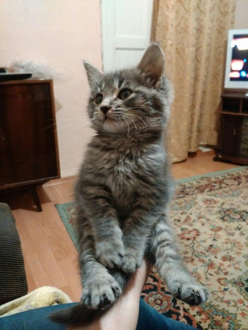Кошке нужна ваша помощь , фото-2