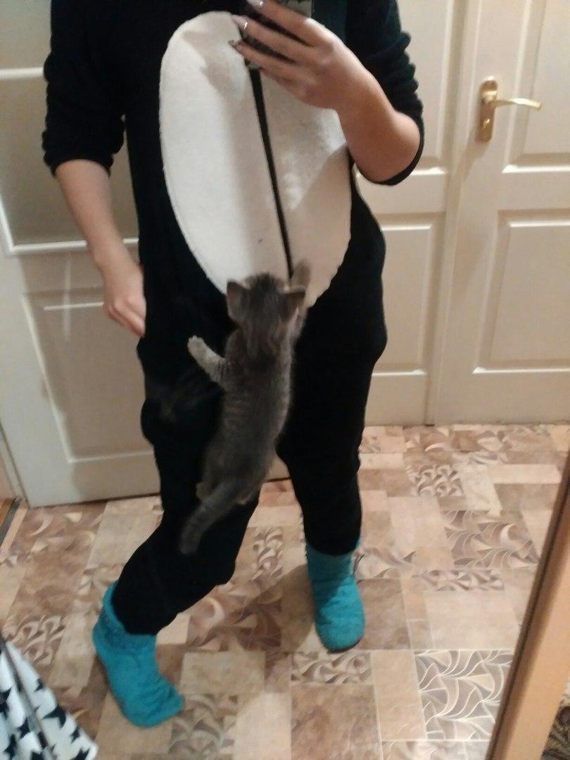 Кошке нужна ваша помощь , фото-3