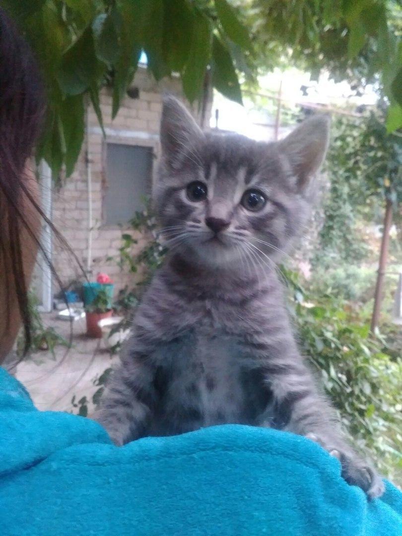Кошке нужна ваша помощь , фото-1