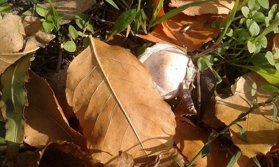 Будьте осторожны: в парке начался грибной сезон, фото-1, Фото из открытых источников