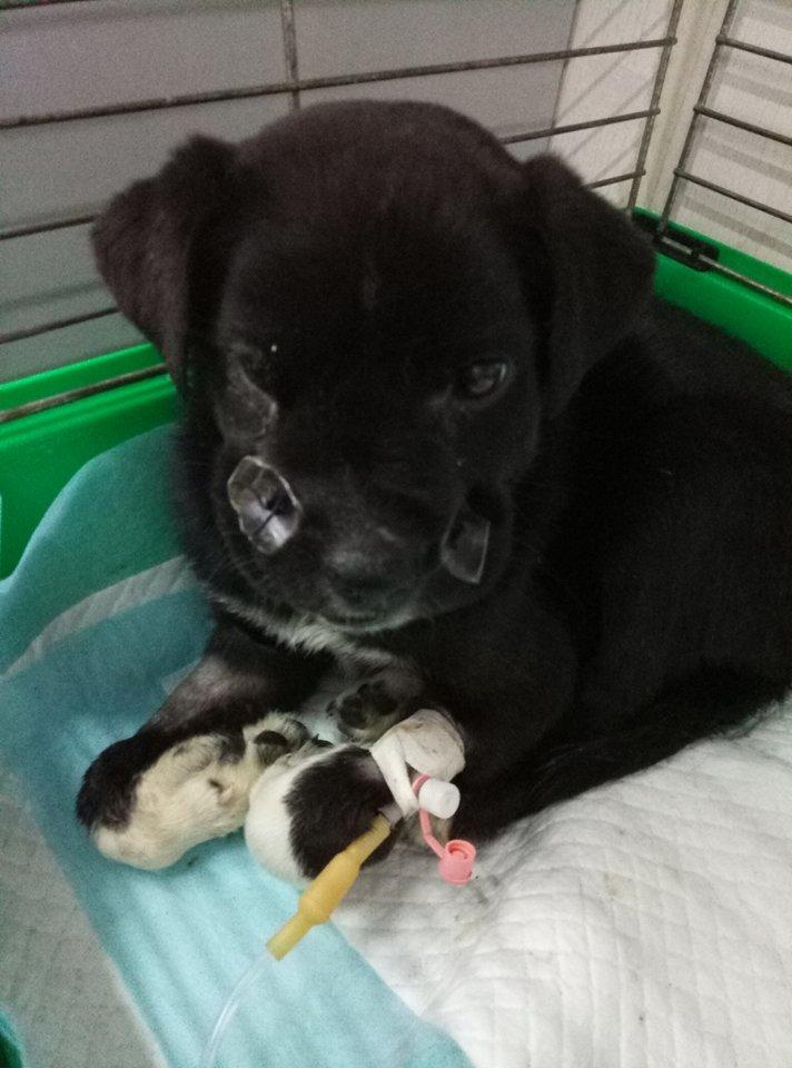 Собака, которая чуть не погибла на улице, нуждается в вашей помощи, - ФОТО, фото-2