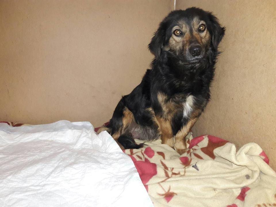 В Мелитополе хотят помочь собаке и ее щенку, не разделяя их, фото-3, Фото из открытого доступа
