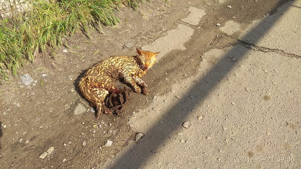 Жительница Мелитополя обнаружила на улице изувеченного кота, - ФОТО, фото-1