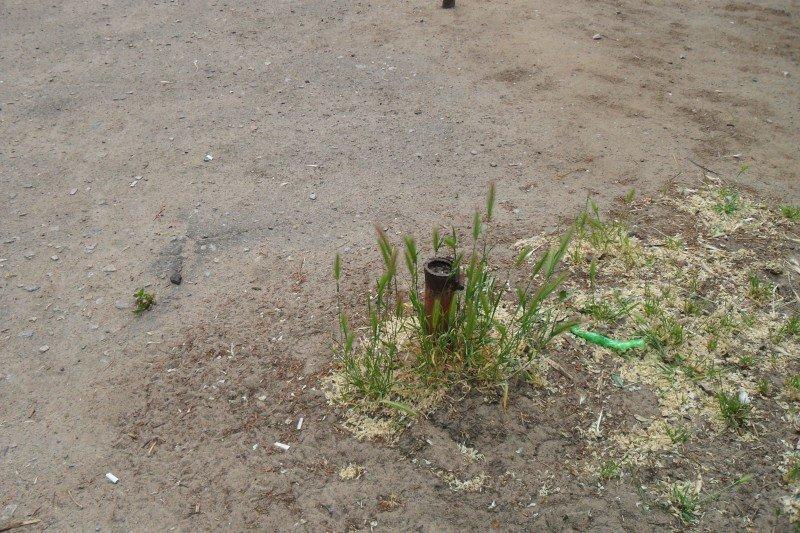 На площадке торчат металлические трубы, о которые могут травмироваться дети , фото-1