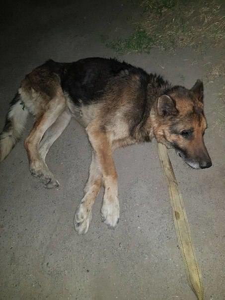 В Мелитополе от смерти спасают истощенное животное, фото-1