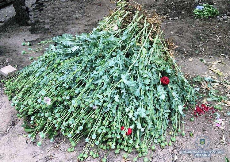 Мелитополец выращивал дома мак и коноплю, фото-1