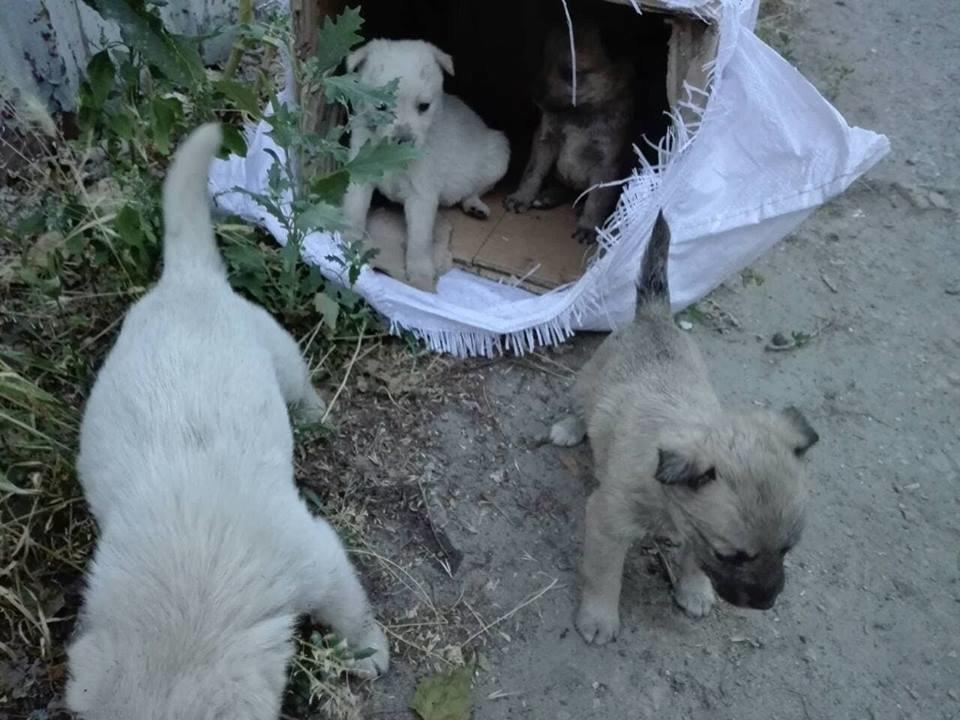 В Мелитополе беспомощных животных пытались похоронить заживо, фото-2, Фото из открытого доступа