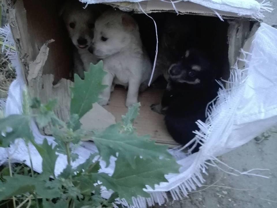 В Мелитополе беспомощных животных пытались похоронить заживо, фото-1, Фото из открытого доступа
