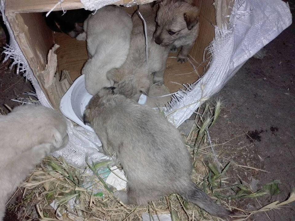 В Мелитополе беспомощных животных пытались похоронить заживо, фото-5, Фото из открытого доступа
